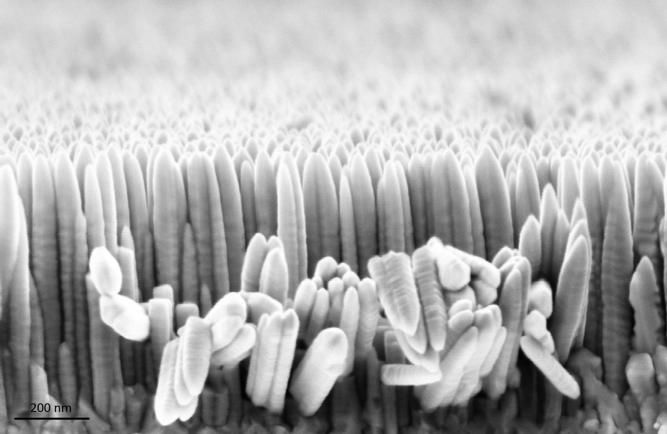 Whiskers de nitrure de niobium (CVD) - crédit Manoël Jacquemi